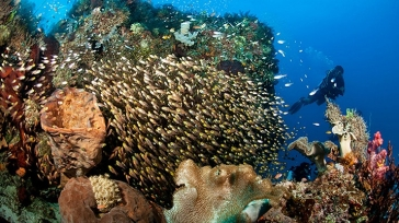 Diving in the tropical waters of mystical Indonesian islands
