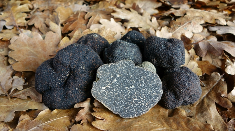 Exclusive truffle journey to the French Rhone-Alpes, a culinary travel experience